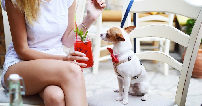 A Guide To Adelaide's Best Dog-Friendly Venues