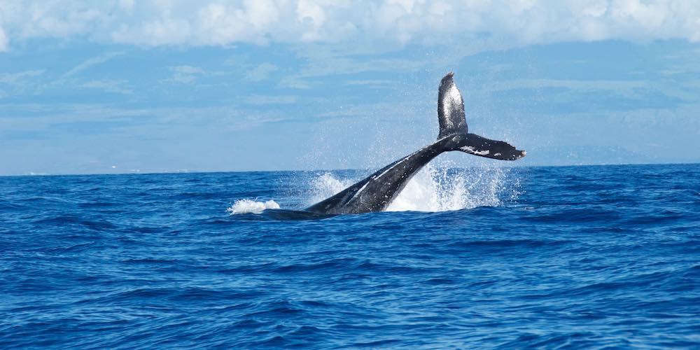 4fc5bbd59692 Your Guide To The Best Whale Watching Spots In SA!